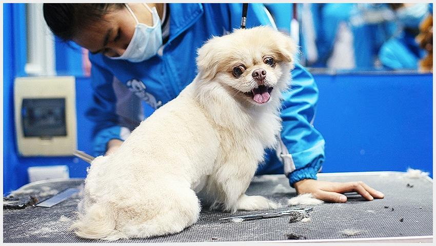 Dịch vụ tắm, cắt tỉa lông & spa cho chó mèo