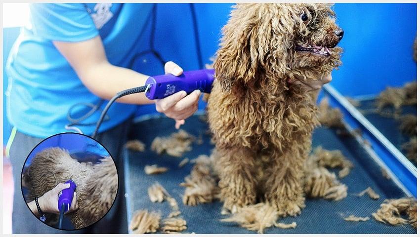 Dịch vụ cạo lông cho chó mèo