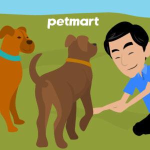 Phải làm sao khi chó bị đau chân và đi khập khiễng?