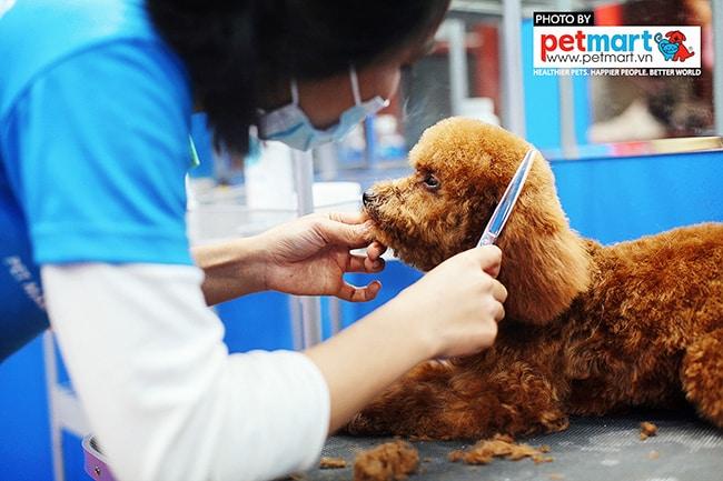 Dịch vụ cắt tỉa lông chó mèo tại Hà Nội và TPHCM