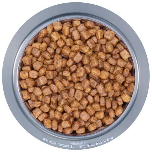 Thức ăn cho chóRoyal CaninChihuahua Puppy