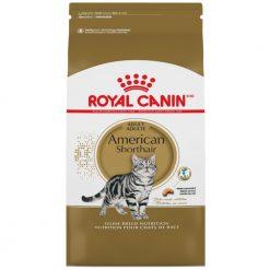 Thức ăn cho mèo Mỹ lông ngắn trưởng thành Royal Canin American Shorthair Adult