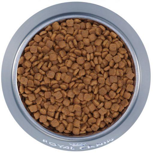 Thức ăn cho mèo Royal Canin Mother & Babycat 400g