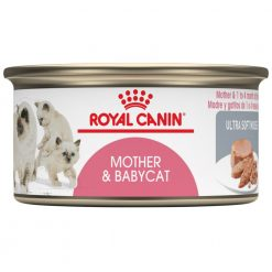 Pate cho mèo Royal Canin Mother & Babycat Ultra Soft Mousse